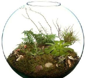 garden in bottle